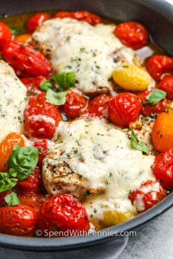 Cherry tomato chicken topped with cheese and basil