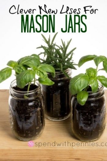 3 major jars with rosemary and basil in them