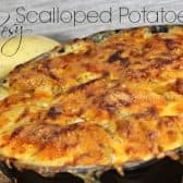 scalloped potatoes with cheese melted on top