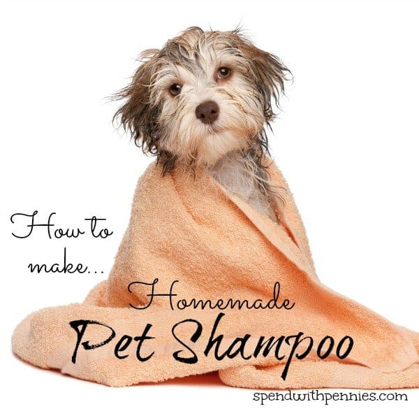 homemade pet shampoo