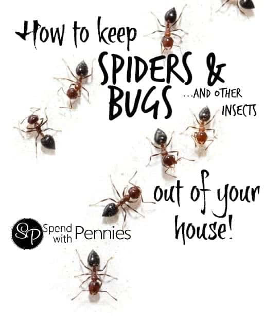 How to get rid of spiders bugs other common insects in for How to get spiders out of your house