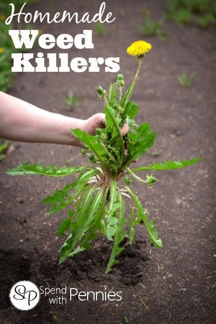 Homemade Weed Killers from Spend With Pennies!