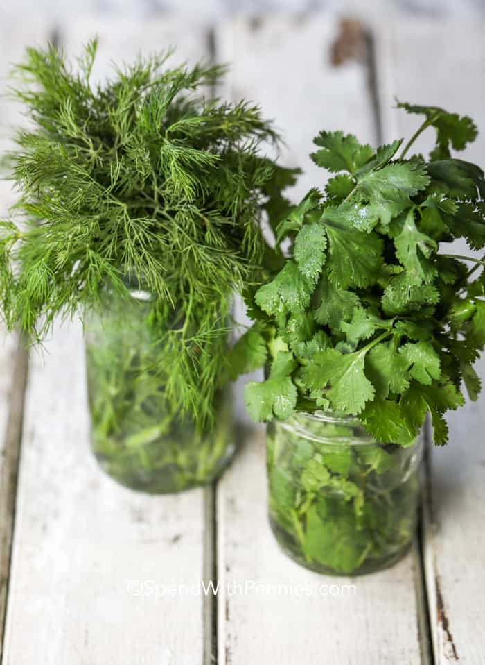 A mason jar of fresh cilantro and a mason jar of fresh dill