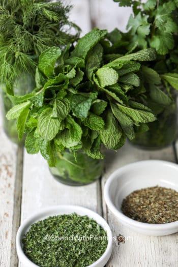Fresh herbs in jars