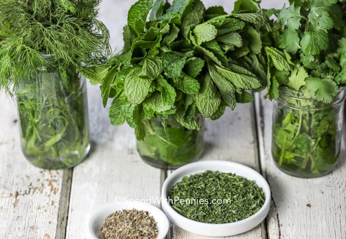 Herbs in mason jars
