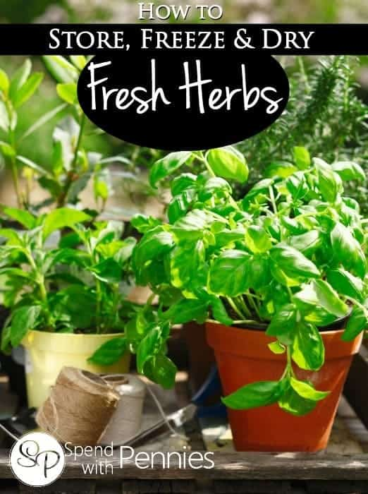 How To Store Freeze Fresh Herbs Spend With Pennies