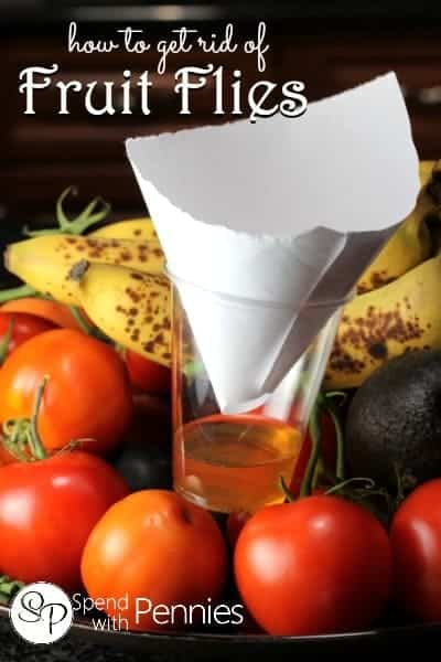 How to get rid of fruit flies!  Those pesky little bugs can't resist this trap!