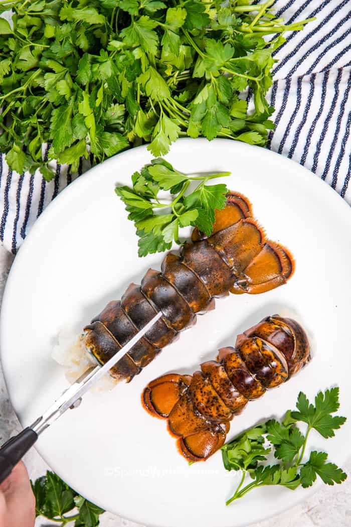 Kitchen shears are used to cut the lobster tail. Two lobster tails on a white plate with parsley garnish