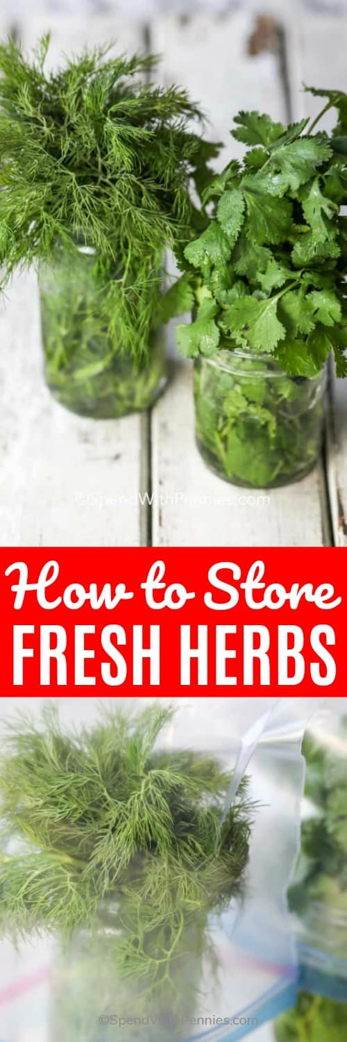 How to Dry Herbs, How to freeze herbs and how to store fresh herbs to keep them for weeks. #spendwithpennies #howto #freshherbs #freshproduce