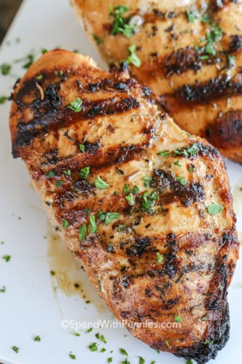 Chicken Marinated and grilled on a plate