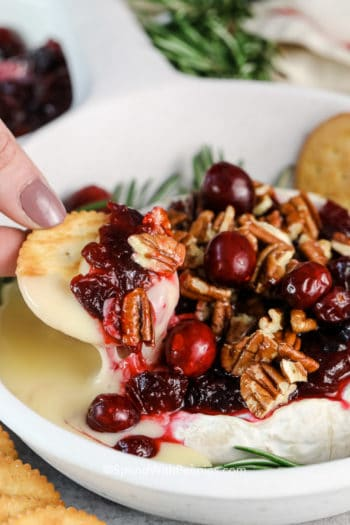 Baked brie with cranberries & pecans being dipped with a cracker