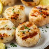 Grilled Scallops on a plate with lemons