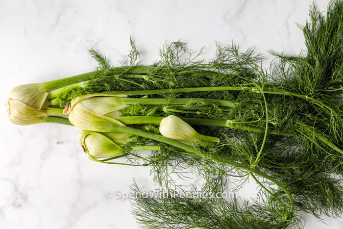 ingredients to make Roasted Fennel