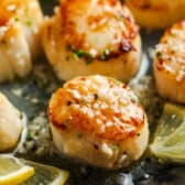 (Simple) Seared Scallops in the pot with lemons