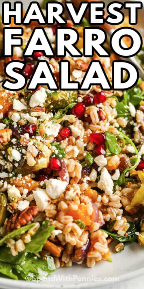 close up of Harvest Farro Salad with a title
